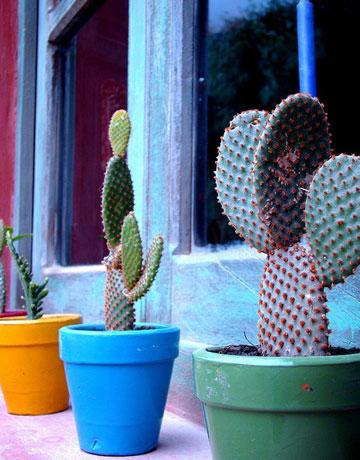 Plantas que sobrevivem