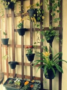 apezinho_com_plantas